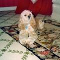 Katie on the Carpet