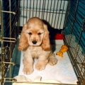Katie as a Puppy