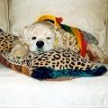 Katie's Favorite Pillow