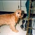 Pitiful Puppy