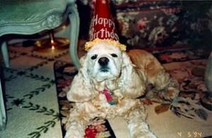 Katie Wears Her Birthday Hat